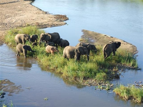 Maputo Elephant Reserve at 45 kms from Catembe.